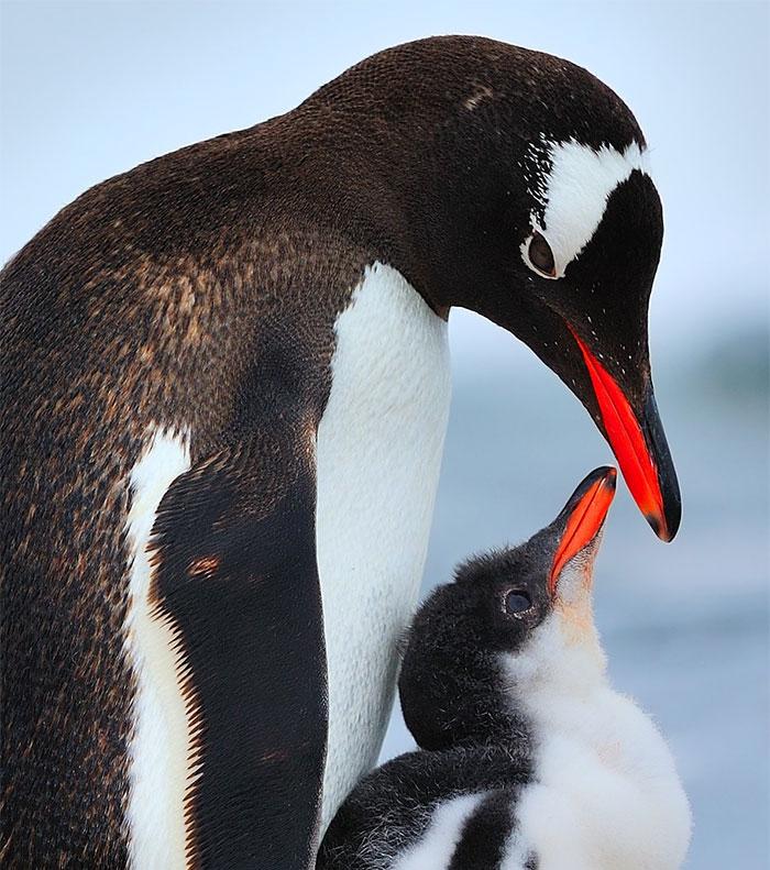 cute-bird-parents (1)