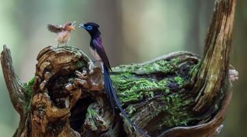 مراقبت پرندگان از نوزادانشان، 20 عکس نفسگیر که قلب شما را نوازش میکند!