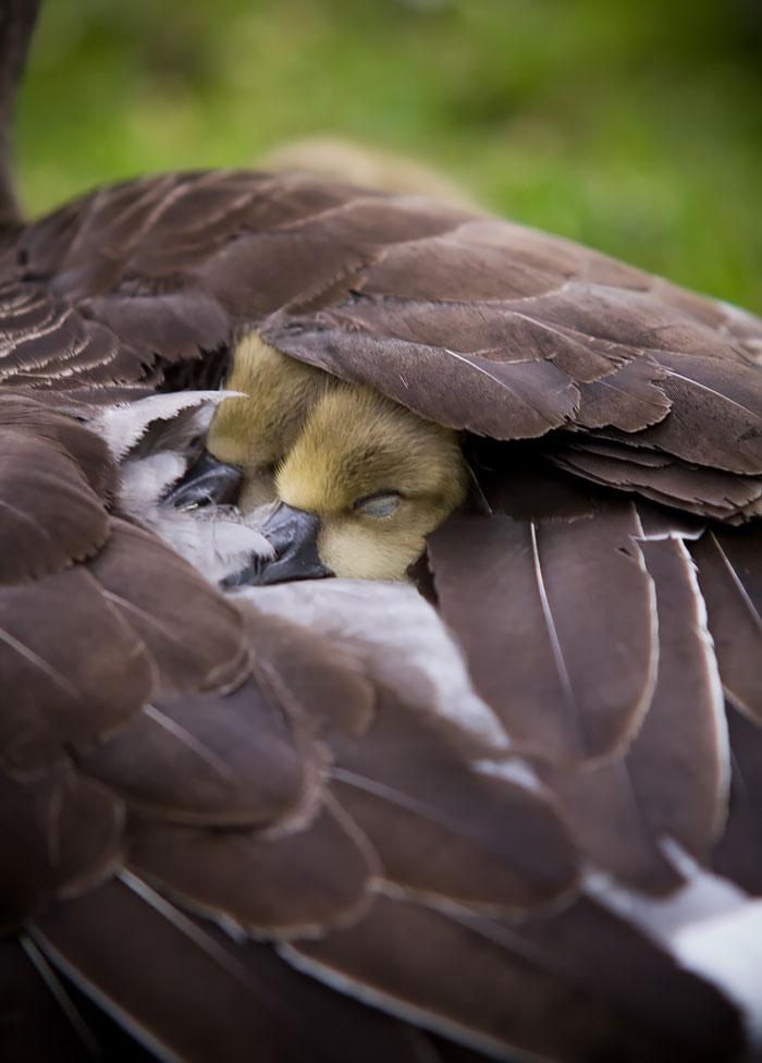 cute-bird-parents (15)