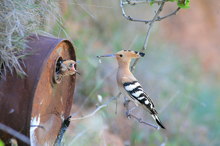 cute-bird-parents (18)