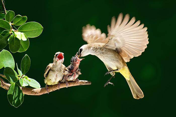 cute-bird-parents (19)