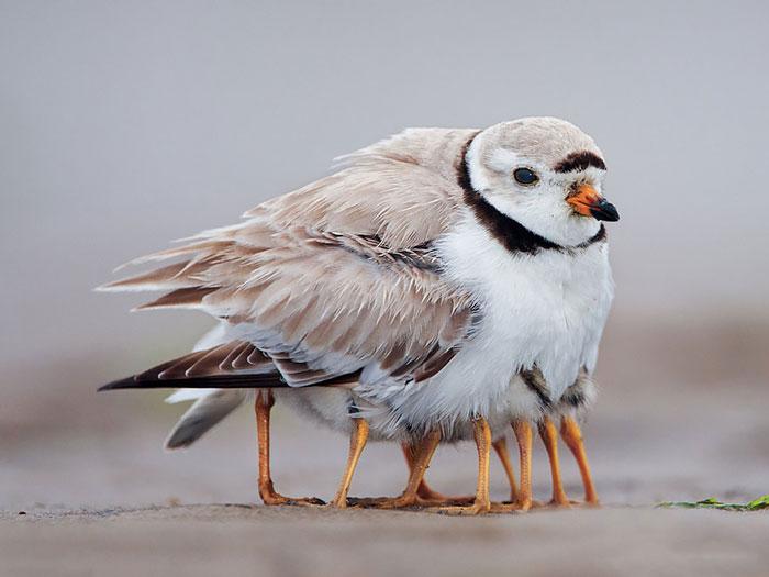 cute-bird-parents (3)