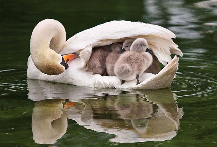 cute-bird-parents (4)