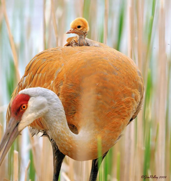 cute-bird-parents (6)