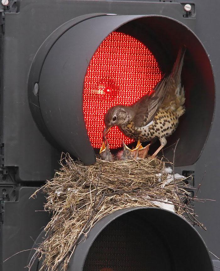cute-bird-parents (9)