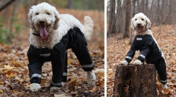dog-pants-muddy-mutts-dog-apparel