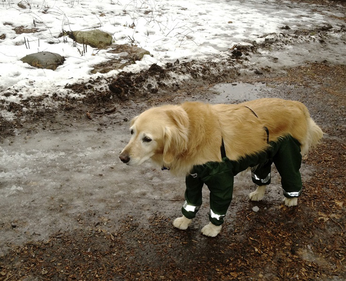 dog-pants-muddy-mutts-dog-apparel (2)