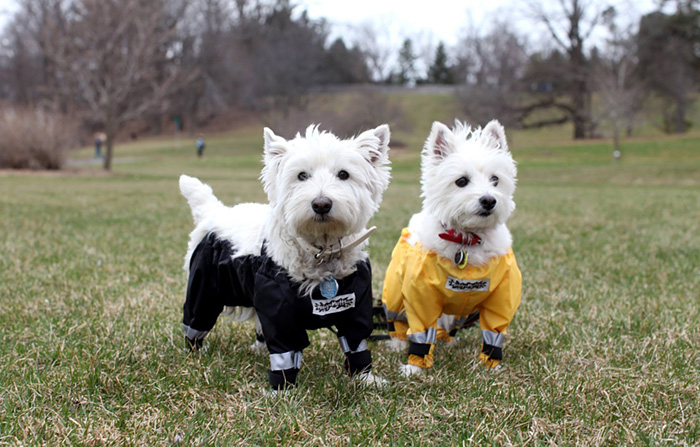 dog-pants-muddy-mutts-dog-apparel (3)