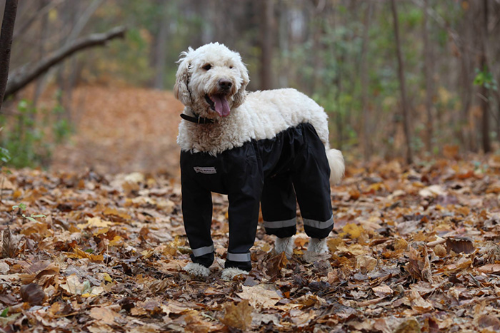 dog-pants-muddy-mutts-dog-apparel (4)