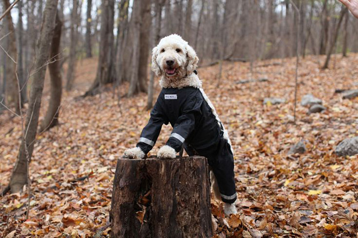 dog-pants-muddy-mutts-dog-apparel (5)
