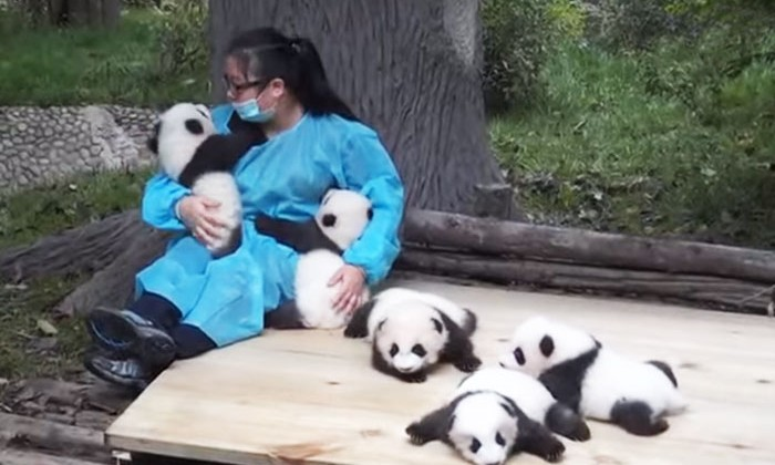 hugger-panda-nanny-best-job-protection-research-center-32,000-USD