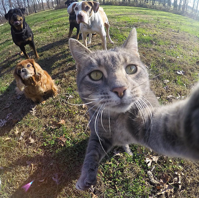 manny-cat-takes-selfies-dogs-gopro-Instagram-user-@yoremahm-1