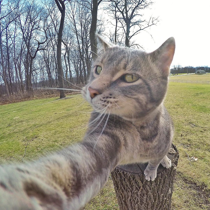 manny-cat-takes-selfies-dogs-gopro-Instagram-user-@yoremahm-2