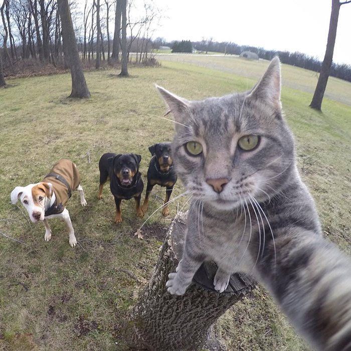 manny-cat-takes-selfies-dogs-gopro-Instagram-user-@yoremahm-3