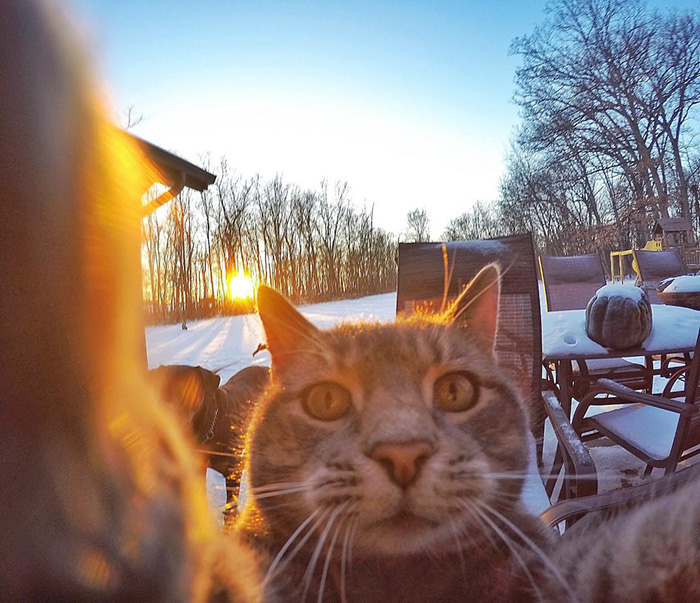 manny-cat-takes-selfies-dogs-gopro-Instagram-user-@yoremahm-4