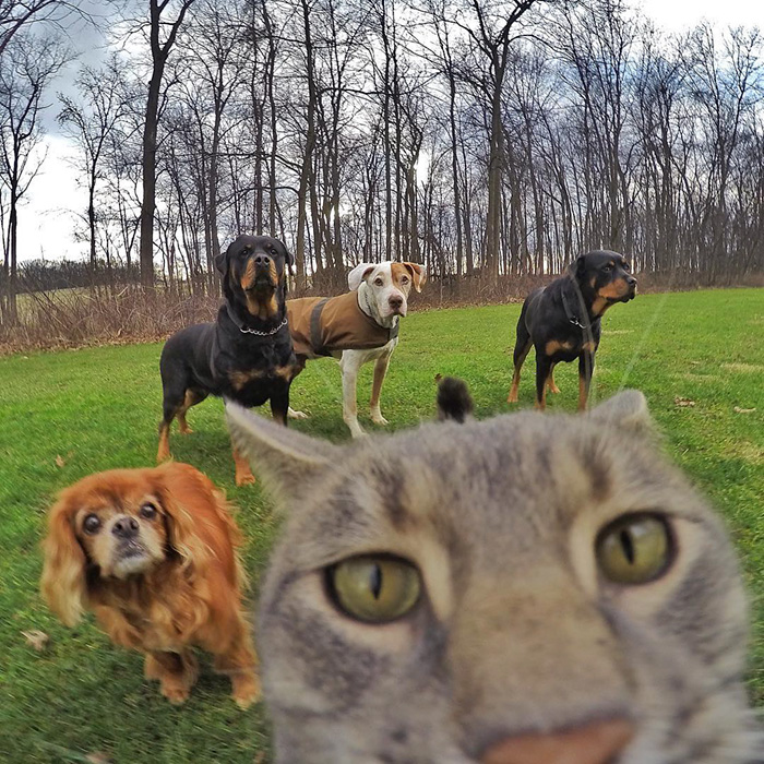 manny-cat-takes-selfies-dogs-gopro-Instagram-user-@yoremahm-5
