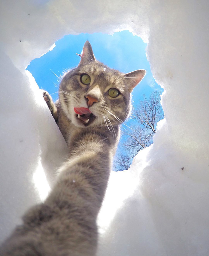 manny-cat-takes-selfies-dogs-gopro-Instagram-user-@yoremahm-6