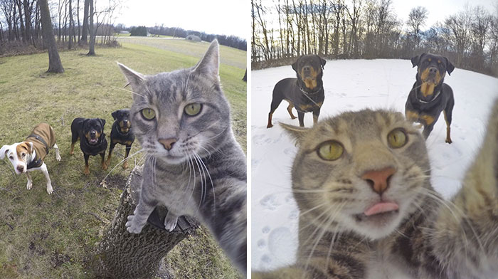 manny-cat-takes-selfies-dogs-gopro-Instagram-user-@yoremahm