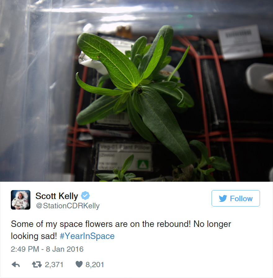 space-first-flower-Zinnias-bloom-nasa-scott-kelly-1