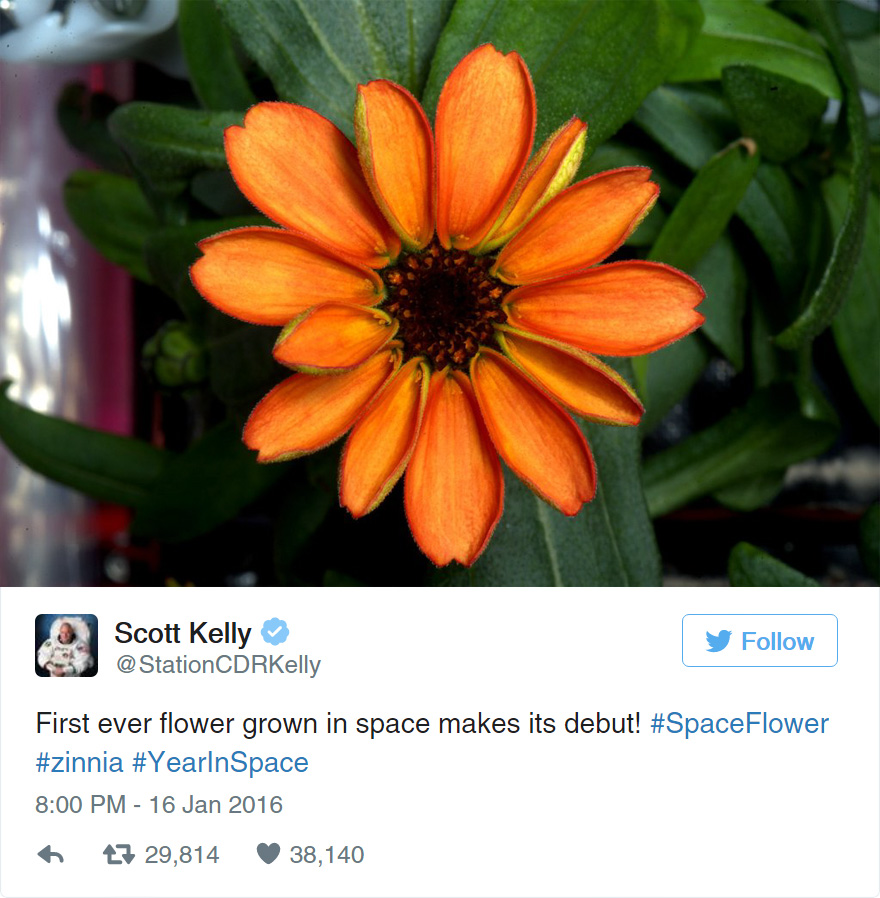 space-first-flower-Zinnias-bloom-nasa-scott-kelly-2