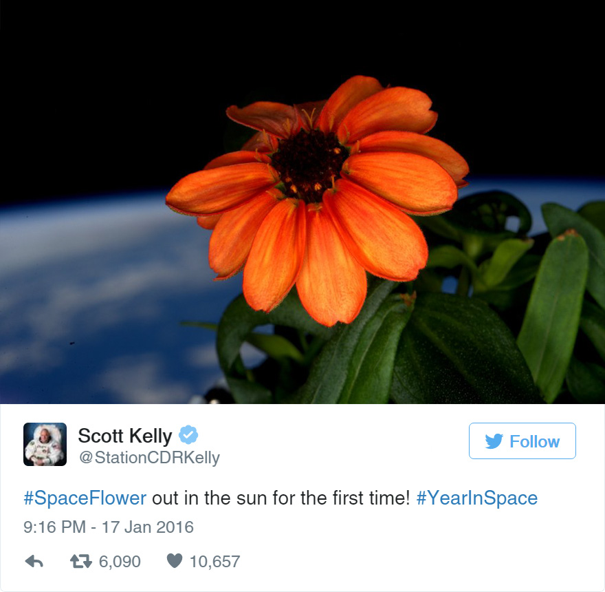 space-first-flower-Zinnias-bloom-nasa-scott-kelly-3