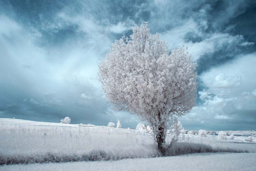 the-majestic-beauty-of-trees-captured-in-infrared-photography (11)