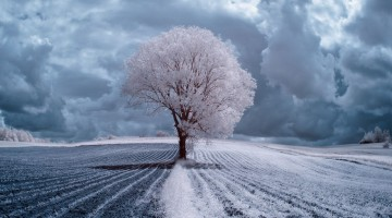 the-majestic-beauty-of-trees-captured-in-infrared-photography