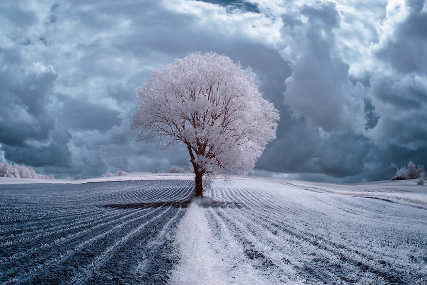 the-majestic-beauty-of-trees-captured-in-infrared-photography (3)