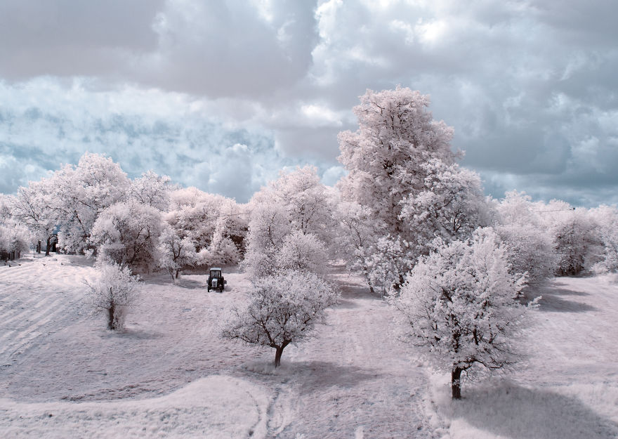 the-majestic-beauty-of-trees-captured-in-infrared-photography (5)