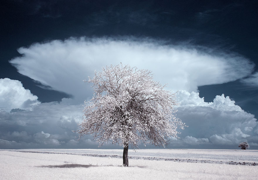 the-majestic-beauty-of-trees-captured-in-infrared-photography (6)