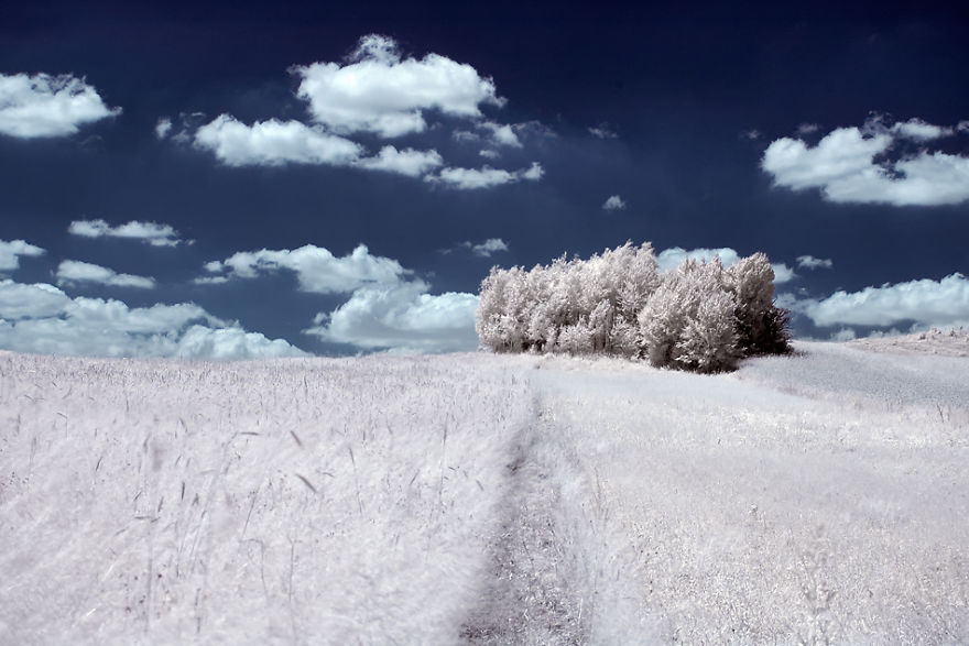the-majestic-beauty-of-trees-captured-in-infrared-photography (8)