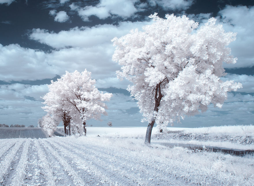 the-majestic-beauty-of-trees-captured-in-infrared-photography (9)