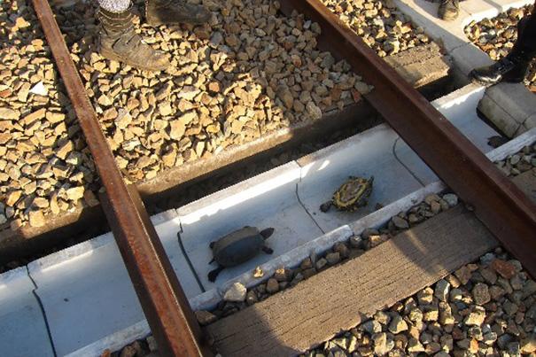 turtle-tunnel-train-track-safety-japan-railways (1)