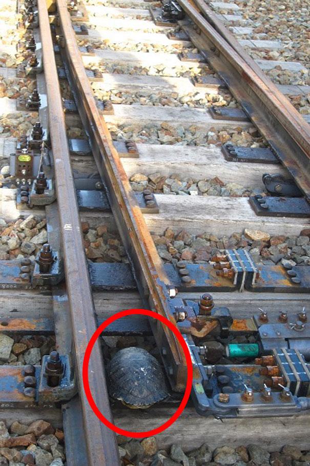 turtle-tunnel-train-track-safety-japan-railways (2)