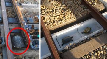 turtle-tunnel-train-track-safety-japan-railways
