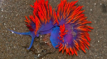 beautiful-unusual-sea-slugs