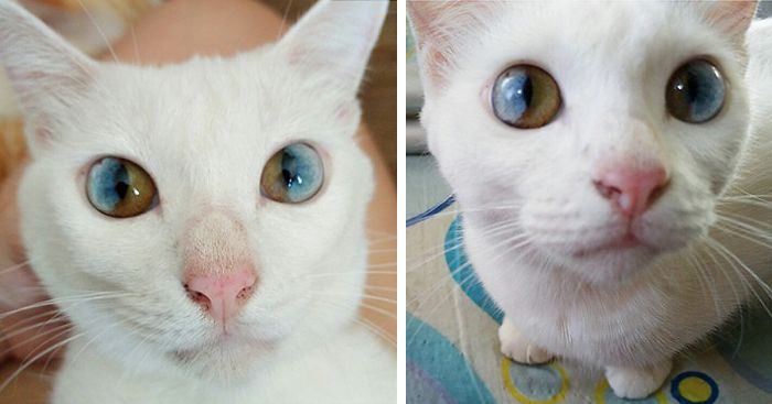 cat-eyes-different-colors-heterochromia
