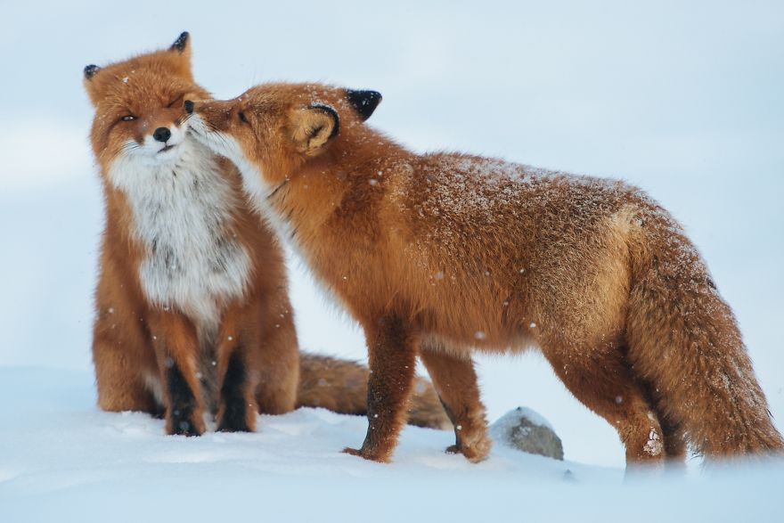 cute-animals-kissing-valentines-day (11)