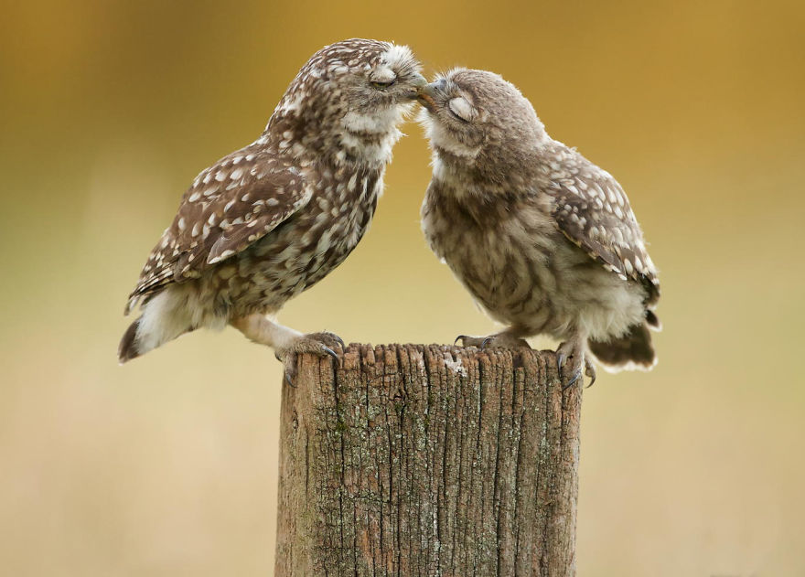 cute-animals-kissing-valentines-day (12)