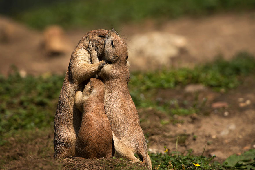 cute-animals-kissing-valentines-day (3)
