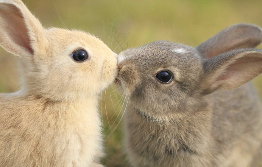 cute-animals-kissing-valentines-day (7)