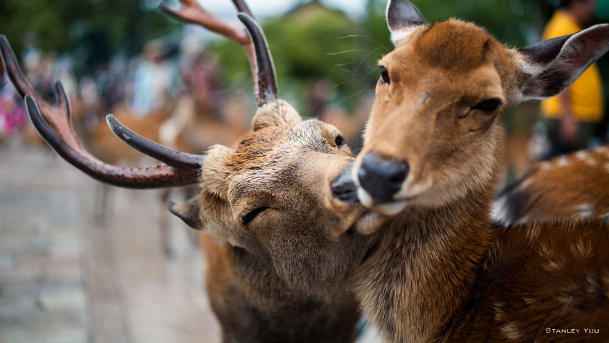 cute-animals-kissing-valentines-day (9)