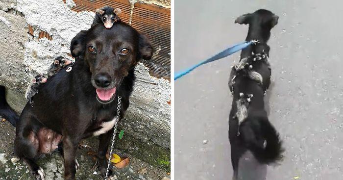 dog-adopts-opossums-baby-orphans-stephanie-maldonado