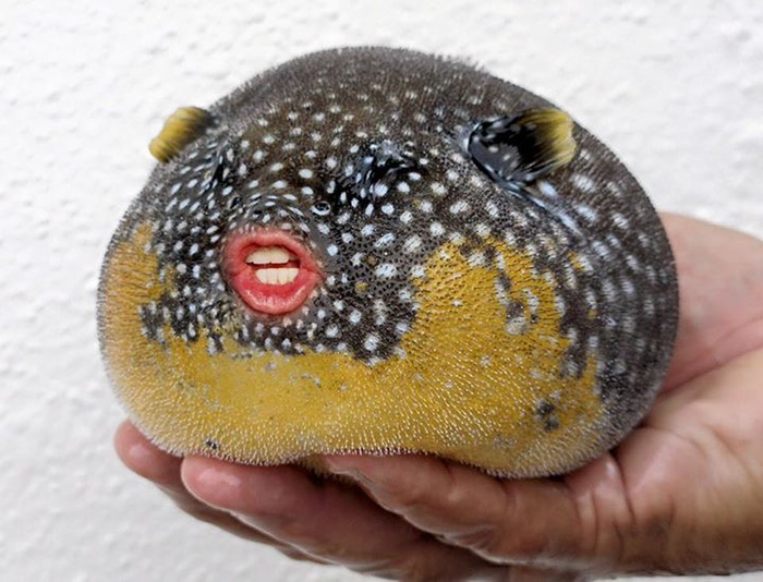 trump-puffer-fish-mouth-photoshop (10)