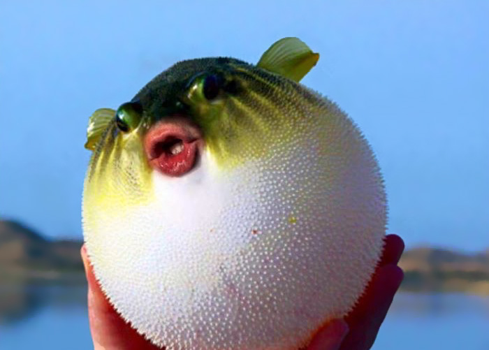 trump-puffer-fish-mouth-photoshop (8)