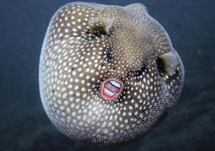 trump-puffer-fish-mouth-photoshop (9)