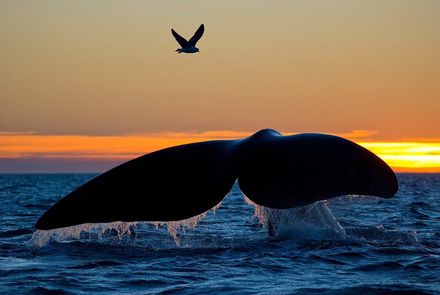 world-whale-day-photos (13)