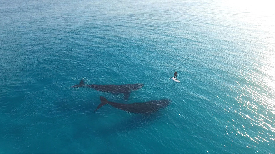 world-whale-day-photos (14)
