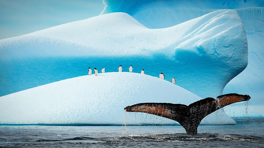 world-whale-day-photos (2)