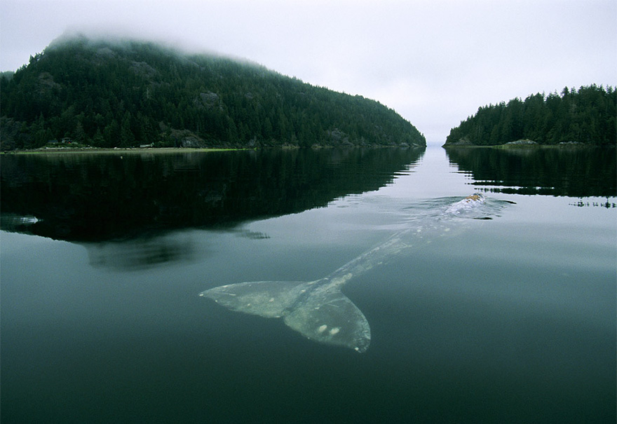 world-whale-day-photos (5)